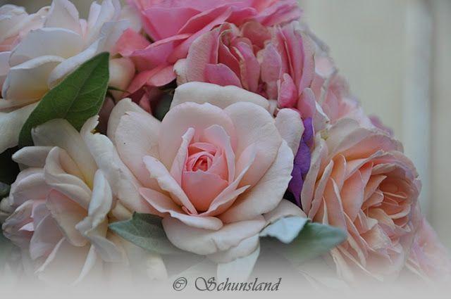 bosje....roze rozen