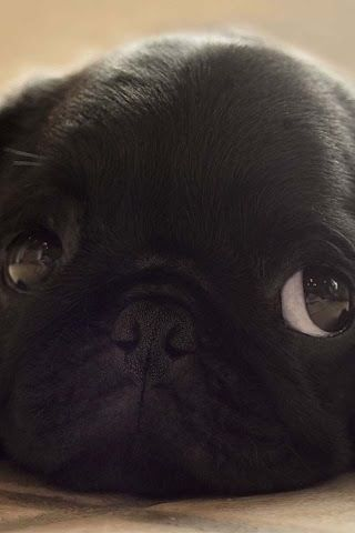 Bah Humpug!, So cute!!!Your eyesight reminds me of my little Chouchou ,where are you?