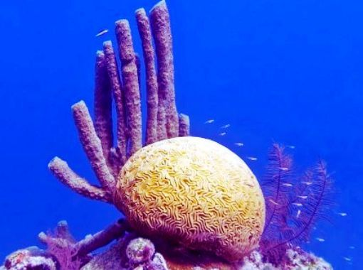 Awesome Marine Life in Belize Barrier Reef