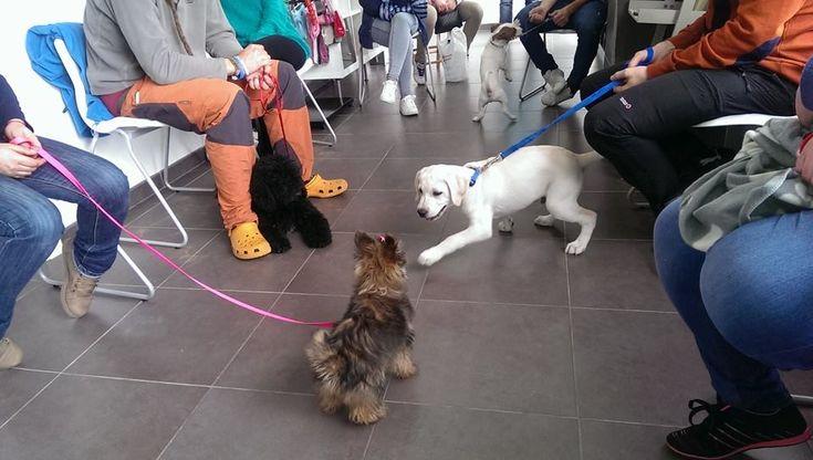El periodo de socialización en el perro