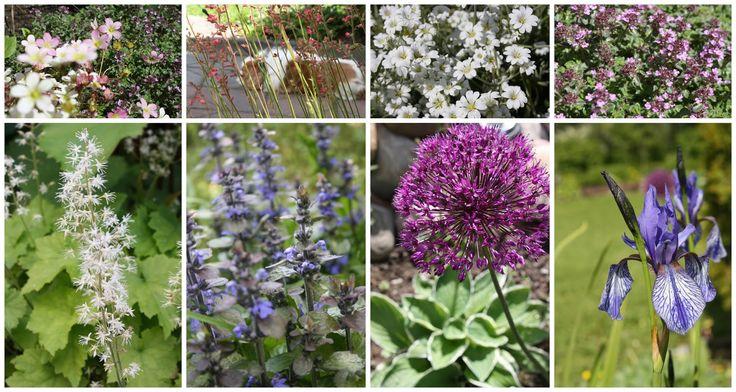 Perenials nordic garden