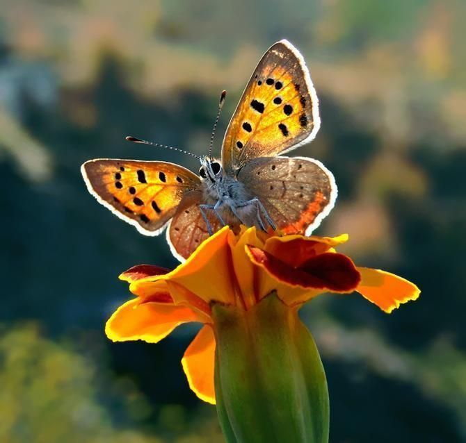 Butterfly Macro - Gorgeous !