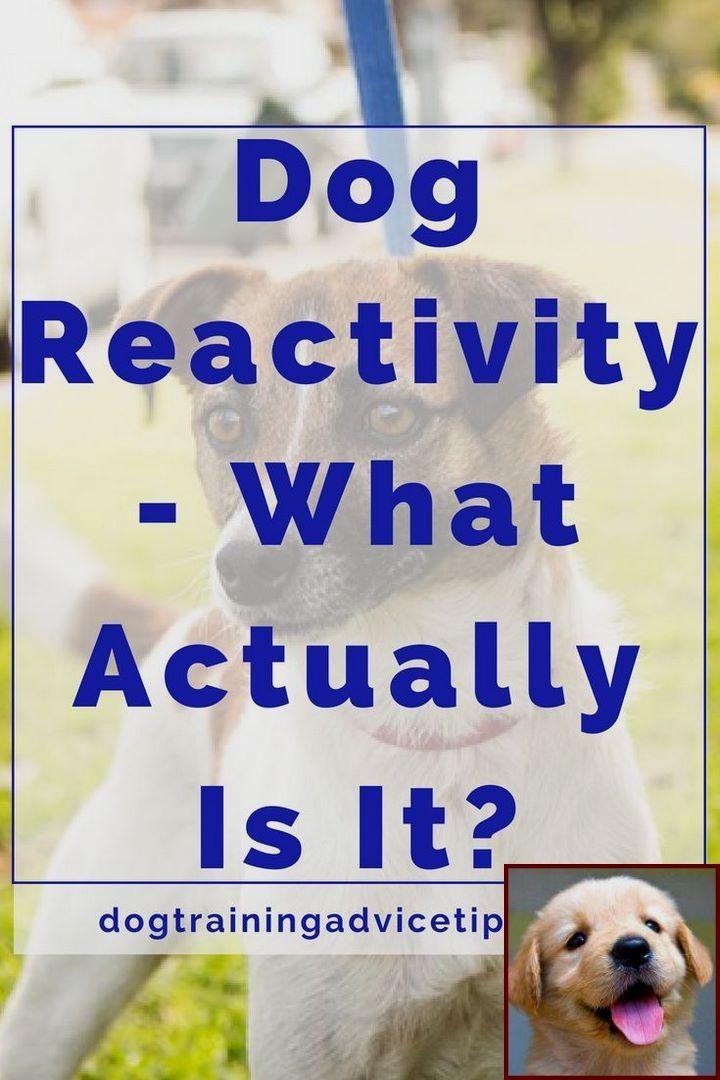 1 Have Dog Behavior Problems Learn About Dog Behavior Expert Near