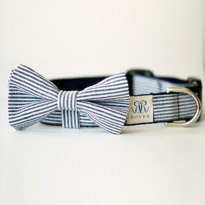 D'leh needs this! Seersucker Bow Tie Collar!!  Yes!! @Natalie Jost Franke, you might need a golden retriever in a seersucker bow tie at your wedding :)