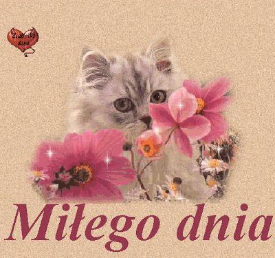 Mile-dnia-z-kotkiem