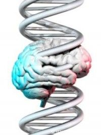 """Biological Explanation for Gender Disparity in Autism by Rick Nauert, PhD. - Researchers present compelling evidence that females require more extreme genetic mutations than do males to push them over the diagnostic threshold for neurodevelopmental disorders. They call this the """"female protective model."""" (Note: Gender bias has also been associated with ADHD diagnosis.)"""