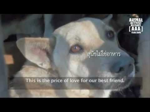 dog meat trade essay Petting a dog increases the brain's level of dopamine and serotonin, hormones that make a person feel good or happy this response is similar to that of a mother looking at her child dopamine is a neurotransmitter that plays a major role in reward-motivated behaviour.