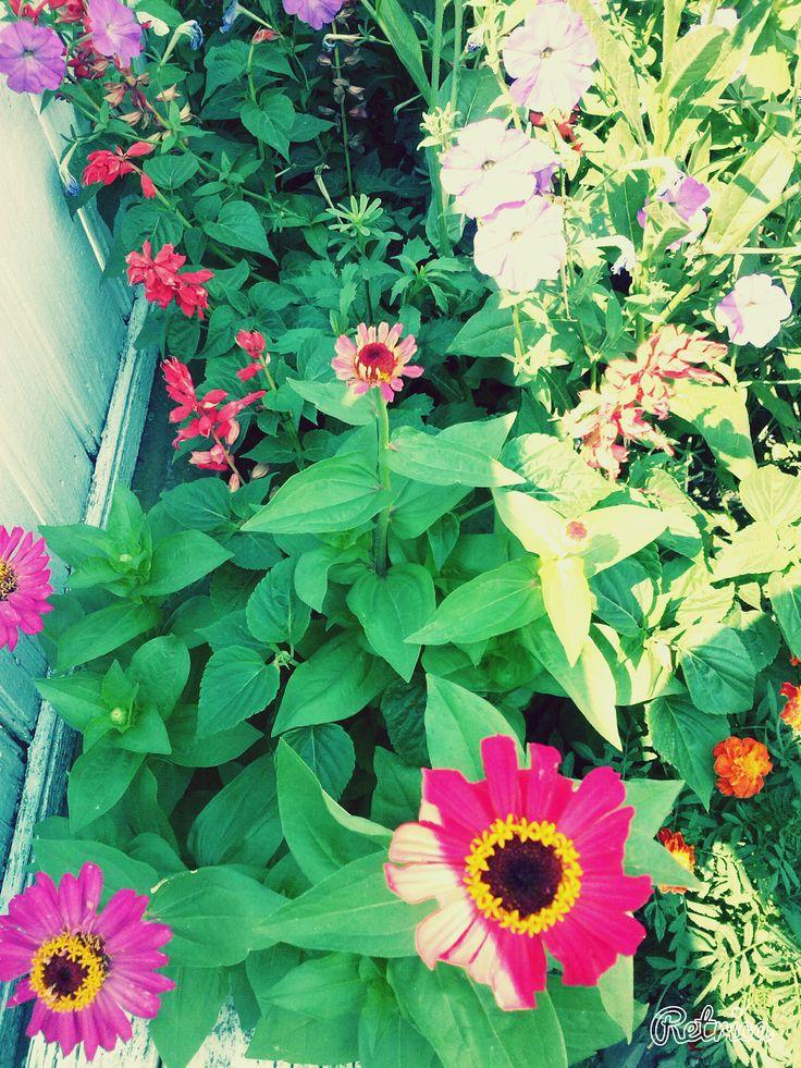 ↬ flori in romania ↫ ↬ fiori in romania ↫ #umbraresti
