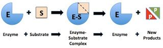 """Blog post from Science Stuff:  """"Everything About Enzymes!!  (and a free lab!)"""""""
