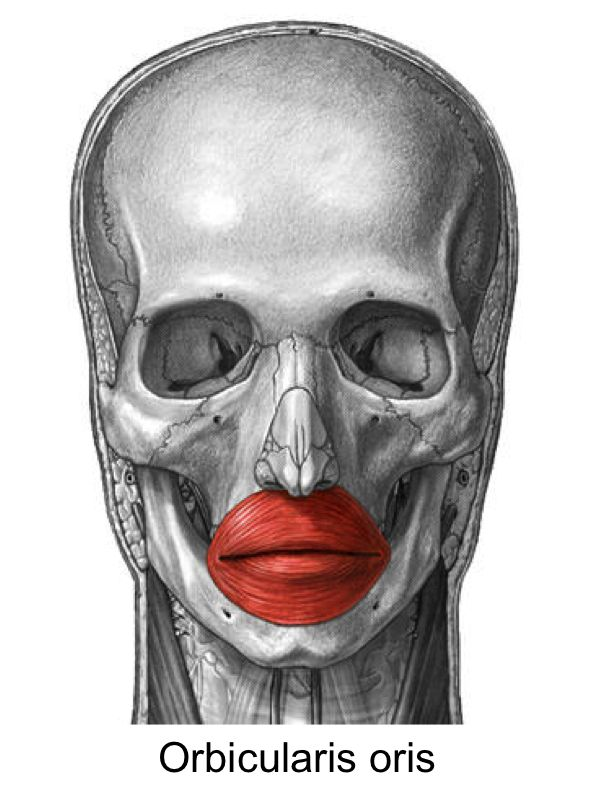 orbicularis oris muscle - klejonka, Human body