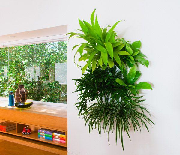 Indoor Living Wall Planter 31 best indoor wall plants images on pinterest   indoor plants