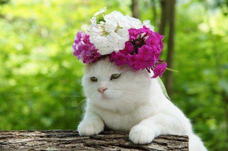 Bridesmaid kitteh is not amused....