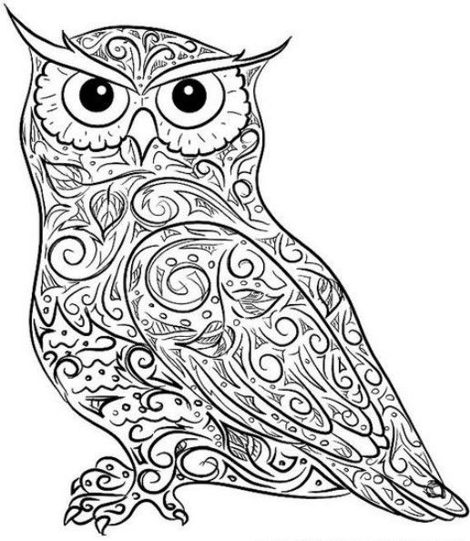 Small Coloring Pages Adult Owl