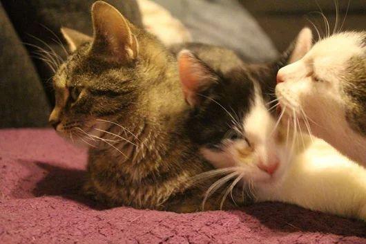 Zazu i Manga - dwa kotki które szukają kochających domów