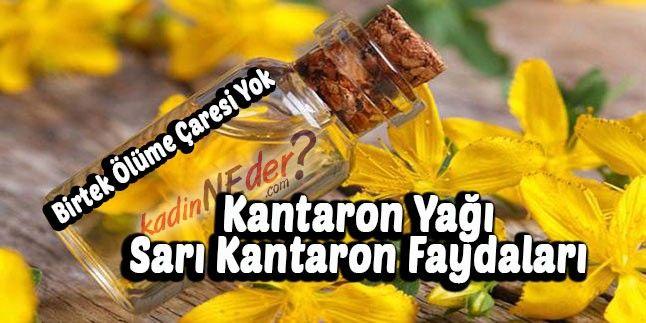 Kantaron Yağı – Sarı Kantaron Faydaları