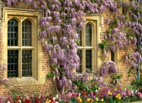 Wisteria lane here there and everywhere pinterest wisteria flowers and gardens - Countryside dream gardens ...