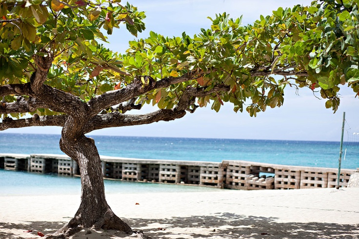 Doctor's Cave Beach, Montego Bay Jamaica by Tricia Bent