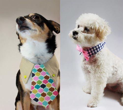 doggie ties!