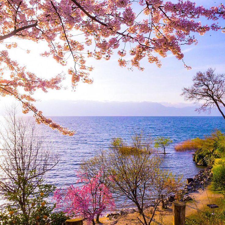 おはようございますo(^_^)o 暖かくなりました〜❣️ もう直ぐに桜のシーズンが始まりますね♪───O(≧∇≦)O────♪ 皆さん素敵な週末を〜☆〜(ゝ。∂) Shiga Prefecture Omihachiman Biwako Coast  #gobiwako #はなまっぷ#しがトコ #flowerstalking #flowerstyles_gf #naturelovers #team_jp_ #team_jp_西 #team_jp_flower #team_shiga #bestjapanpics #bestjapanpic #bokeh_love_tr #tokyocameraclub #東京カメラ部 #loves_japan #lakebiwa #loves_nippon #lovers_nippon #loves_world #nikond750 ##naturelovers #igersjp #icu_asia #ig_japan #icu_bw #wu_japan #写真好 #写真好きな人と繋がりたい #カメラすきな人と繋がりたい…