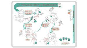 Numentum 7stressfactoren voor beelddenkers in beeld & woord
