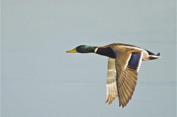 BirdWatching Menorca - Observación de aves   Alojamiento en Menorca