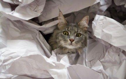 Imparare a vivere con un gatto significa rispettare le sue necessità ma anche saper gestire i suoi atteggiamenti indirizzandolo verso comportamenti corretti qualora il micio non abbia ancora appreso le regole del buon vivere. #vivereconungatto