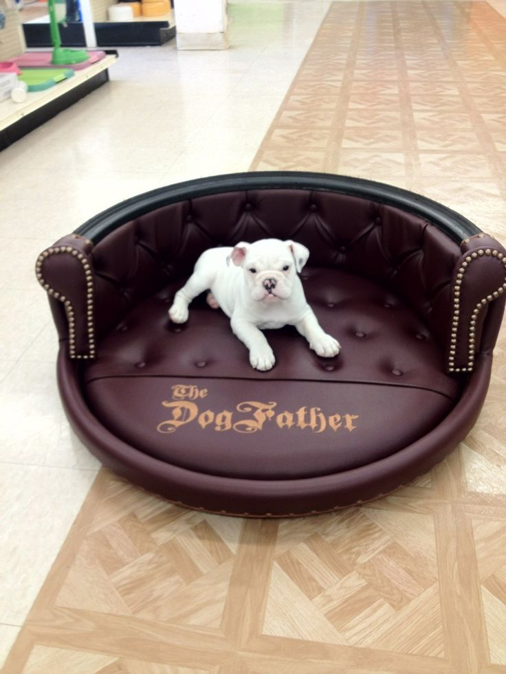 17 best images about swanky zoo inc on pinterest custom for Making a dog bed out of a table