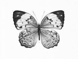 mariposas dibujos a lapiz - Buscar con Google
