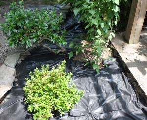 What Is A Weed Barrier: Tips On How To Use Weed Barrier In The Garden