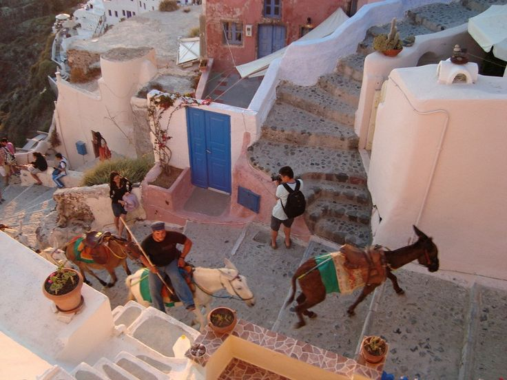 Donkeys in #Santorini are part of the island's charm and local culture. These cute animals have been serving the locals for years, transferring the tourists up and down the steep steps of Santorini, from the port to the top of #Fira.