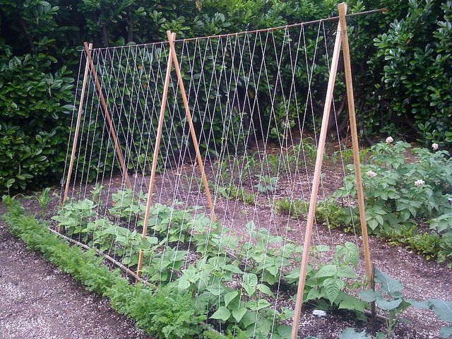 Homemade Trellis for the garden