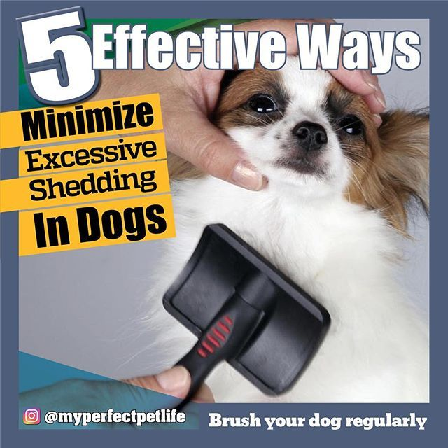 Brush Your Dog Regularly This Is Probably The Most Effective Way