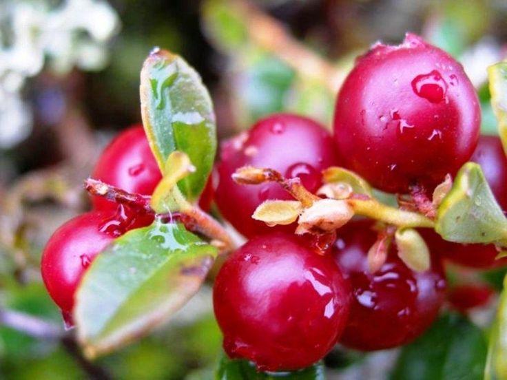 Бальзам для губ из ягод клюквы