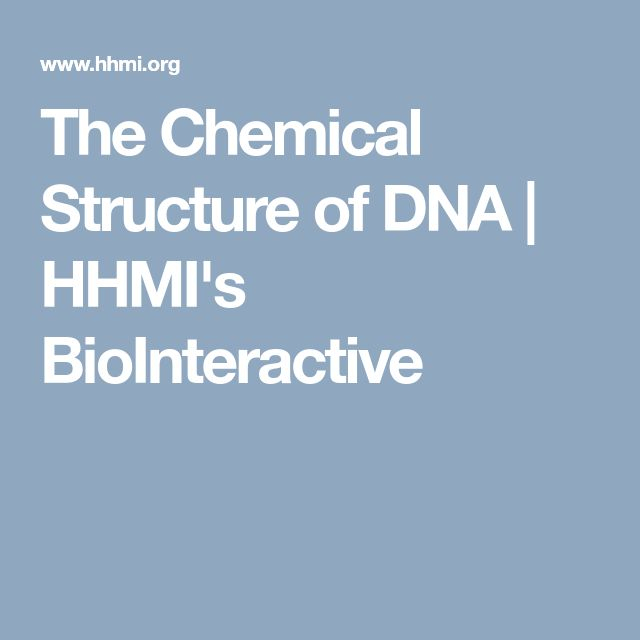 The Chemical Structure of DNA | HHMI's BioInteractive