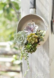 """Now that is clever """"up-cycling"""" with creativity.  Another clever way to feature the beauty of succulents."""