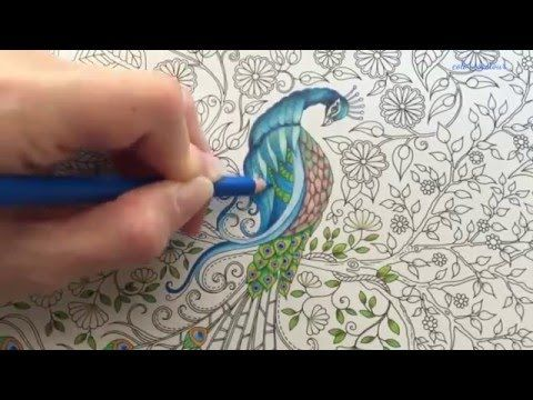 Peacock Part 2 3