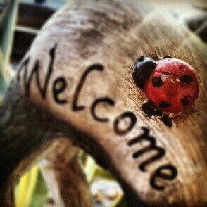 Welcome little ladybug