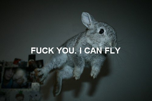 fuck you. i can fly: Cat, Dreams Big, Quotes, Flying Bunnies, Motivation Posters, Smile, White Rabbit, Animal, Eye