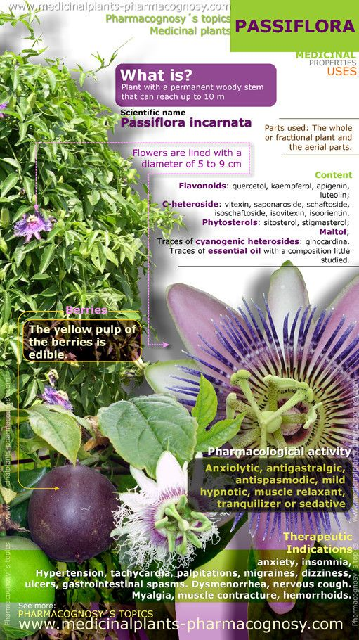 Passiflora or passion flower. Infographic. Summary of the general characteristics of the Passiflora plant. Medicinal properties, benefits and uses more common of Passion flower.   Pharmacognosy - Medicinal plants - Herbs.  http://www.medicinalplants-pharmacognosy.com/herbs-medicinal-plants/passiflora-passion-flower/health-benefits-infographic/