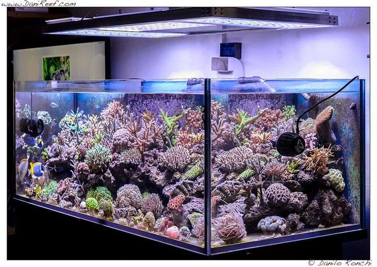 You will notice how the beauty of the shapes and colors of corals and fish are & 403 best Orphek | Aquarium LED Lighting images on Pinterest ... azcodes.com