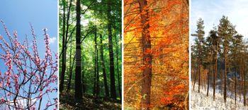 Négy évszak kollázs tavasz nyár ősz tél photo
