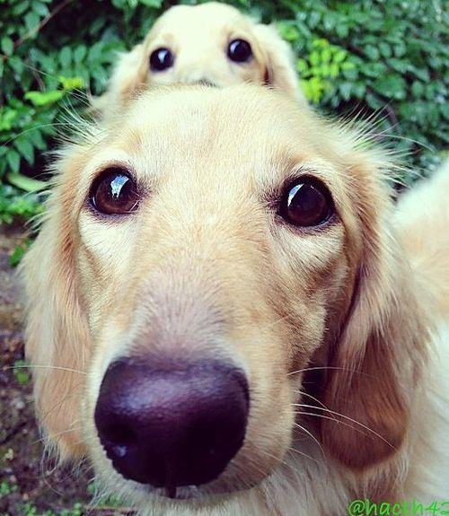 Oi! A gente ama você! Que tal um fim de semana juntos? *-* #Cachorro #FdS!