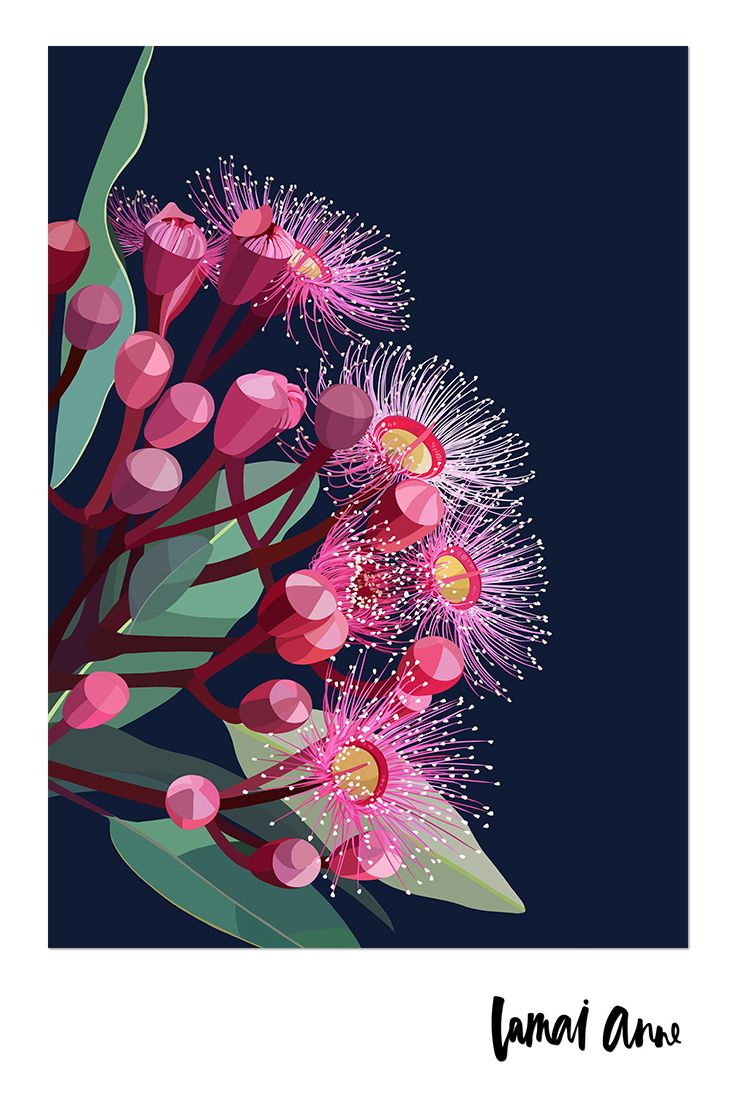 Flowering Gum limited edition giclee art print by Australian artist Lamai Anne. What a wonderful way of bringing the Australian outdoors and a real pop of colour into your home. Lamai's artwork is a collaboration of Native Flora and Fauna that encompasses her home and surroundings. Her illustrations of Australian Natives are meticulously brought to life through her digital art, and the composition between the seasons to create vivid, colourful and eye catching pieces.