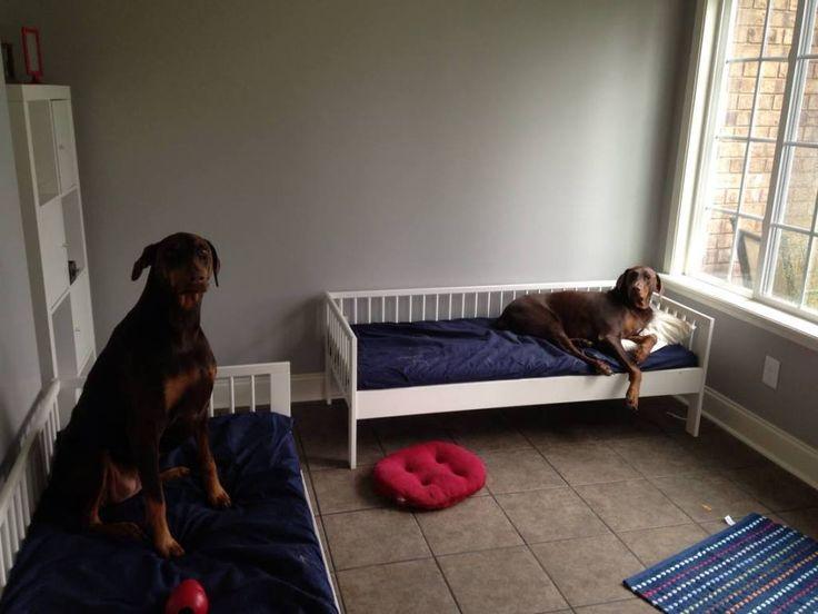 Ikea toddler beds for big pups....OK ACTUALLY, this makes sense....
