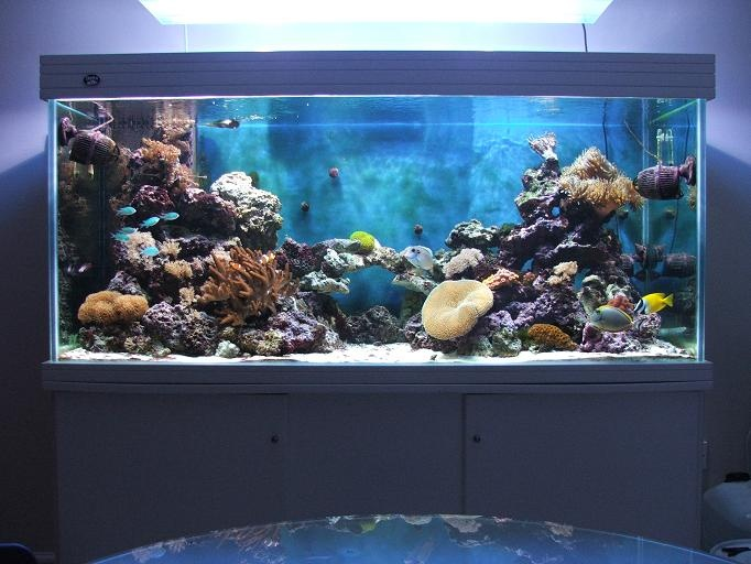 43 best images about fishtank frenzy on pinterest for Exotic fish tanks