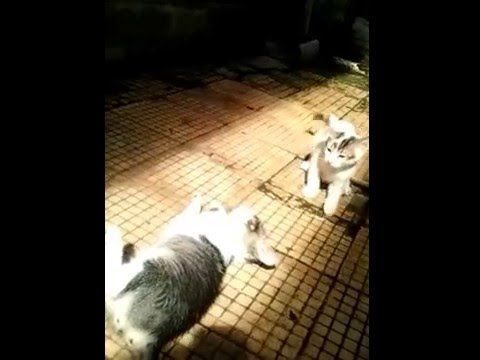 action cute kittens and cute 2016/funny cat fights - https://positivelifemagazine.com/action-cute-kittens-and-cute-2016funny-cat-fights/ http://img.youtube.com/vi/xDT_sKyytsc/0.jpg  aksi anak kucing lucu dan imut funny cat funny cat videos funny cat funny cat videos 2015 funny cat funny cat vines funny cat funny cats and dogs funny cat … Judy Diet Programme ***Start your own website with USD3.9 per month*** Please follow and like us:  var addthis_config =   u