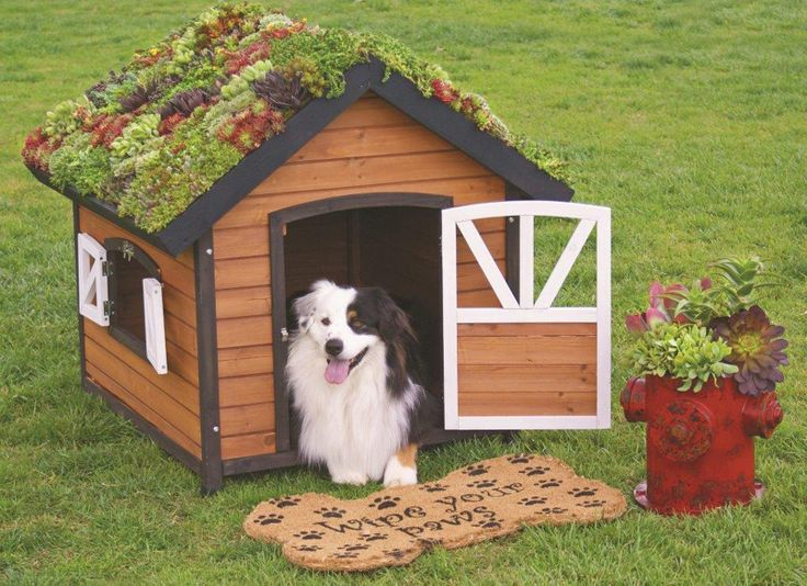 Plant a succulent roof doghouse and be the envy of all the dogs in the neighborhood!