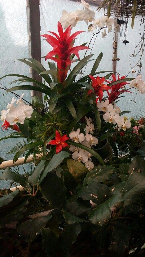 Výstava orchidejí a motýlů 3/17