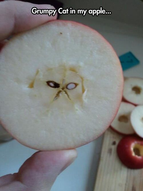 Grumpy cat in an apple --- She's everywhere!  That person should sell it on eBay ;)