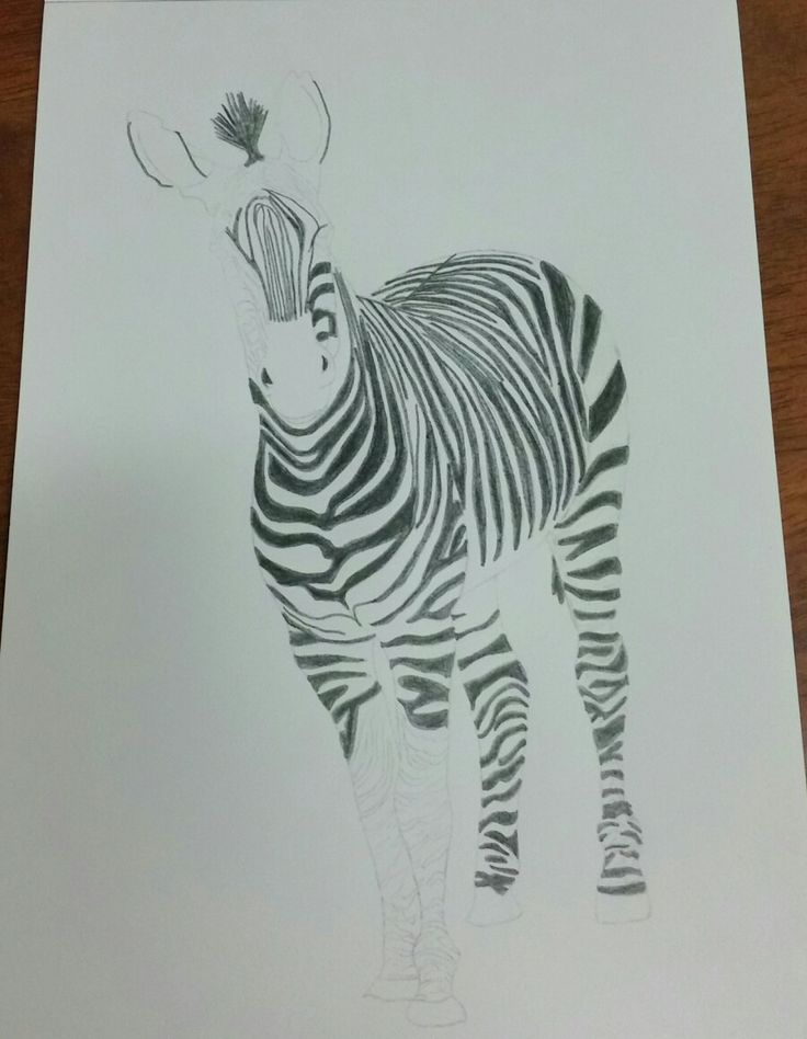My zebra is starting to take shape slowly. #art #drawing #illustrate #zebra #wildlifeart